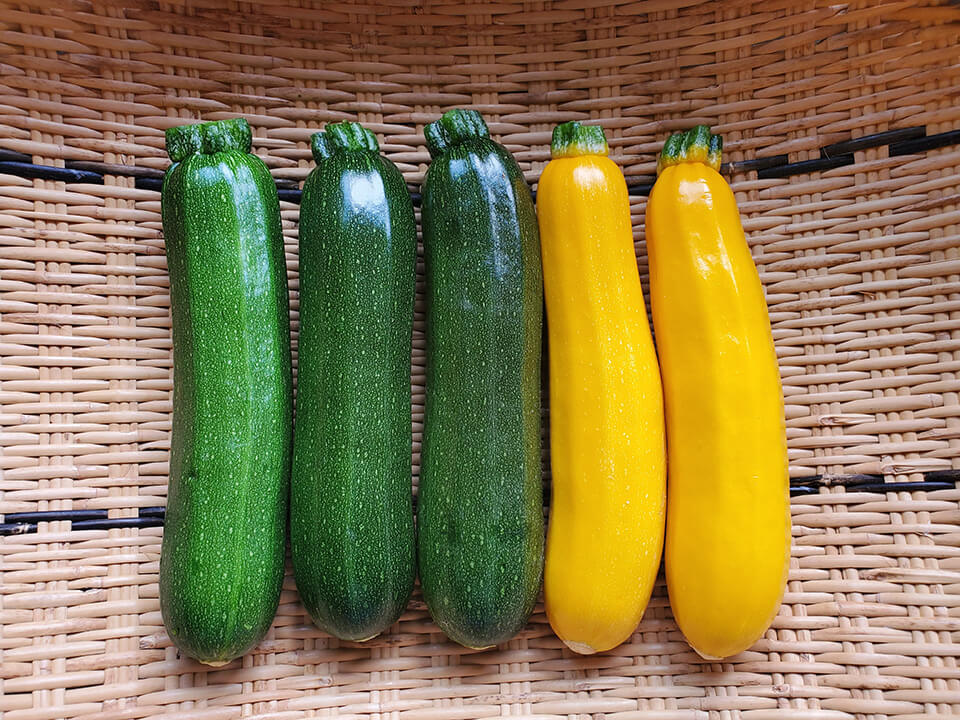 ズッキーニ(緑・黄)